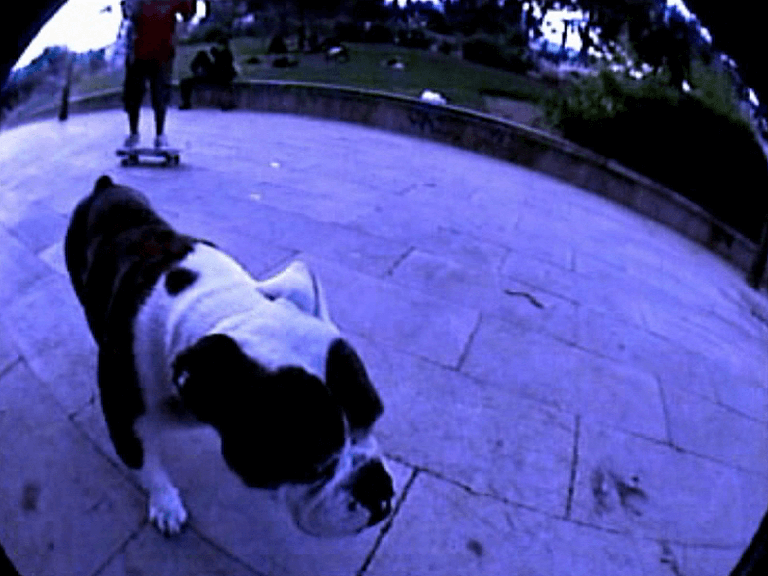 Trailer Sa Feixina Reborn, skate video